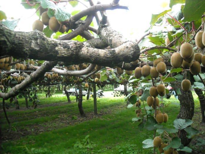 Te Puke: Plant & Food Research
