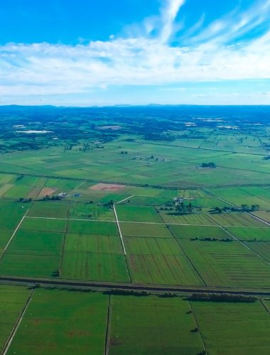 Te Puke region from a drone
